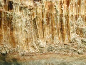 asbestos fibers.jpg