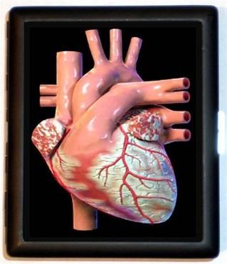 Thumbnail image for heart organ.jpg